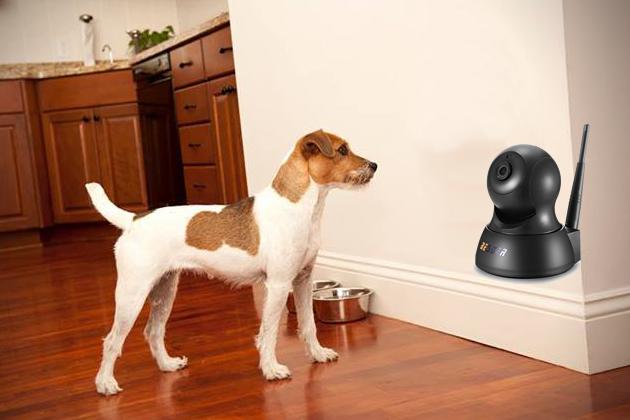 camera video pentru animale de companie
